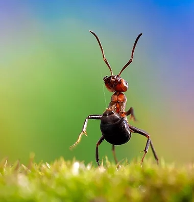Ant Pest Control Smash D Em Pest Control