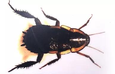 Gisborne cockroach pest control