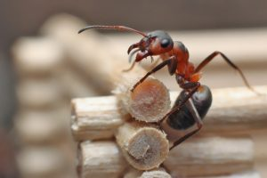 are there signs of ants in your home - ant crawling on wood